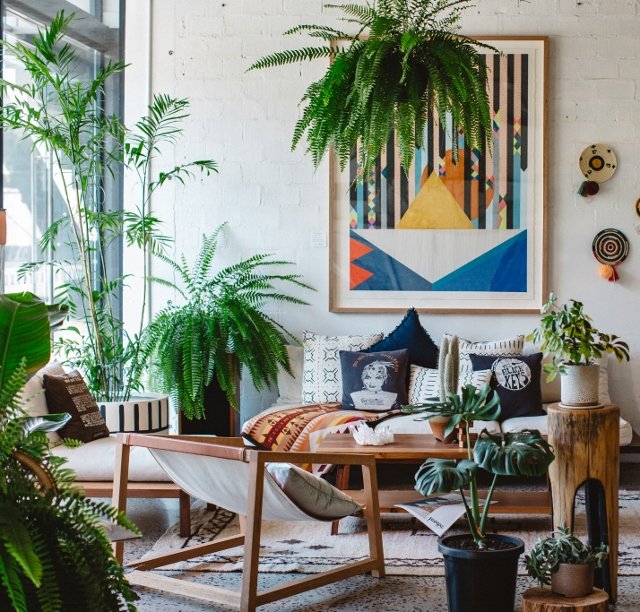Supreme Accents How to add Cozy to Any Room - Layer texture with Plants