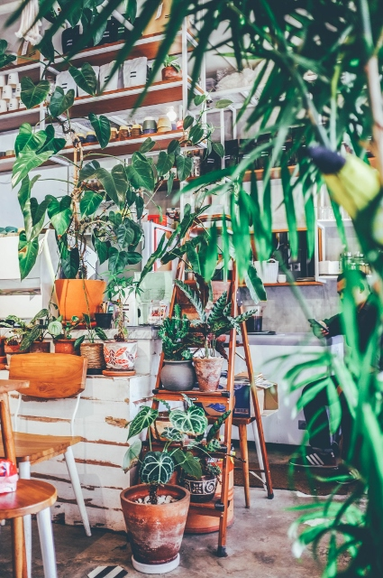 Supreme Accents Decorate for Healthy Living – Interior Decorating with House Plants-Show off Your House Plants