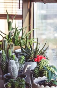 Supreme Accents Decorate for Healthy Living – Interior Decorating with House Plants - Use Different Shapes and Sizes